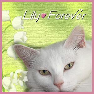 RIP LILY
