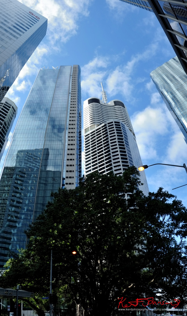 Old fig tree and modern high rise office buildings, Brisbane CBD. Photo by Kent Johnson.