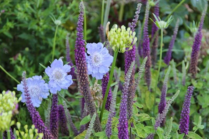 Derri re les murs de mon jardin seeds of love 2015 les gagnants sont l - Derriere les murs de mon jardin ...