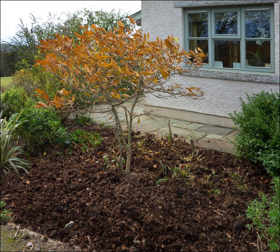The Nook - A Garden Blog: November 2013
