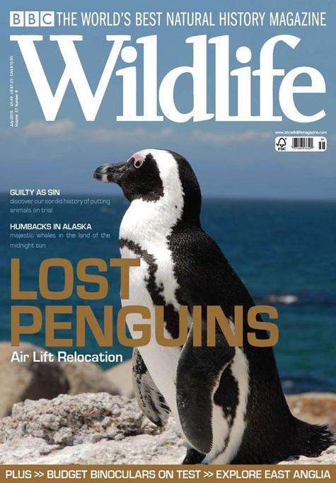 BBC Wildlife Penguin Cover