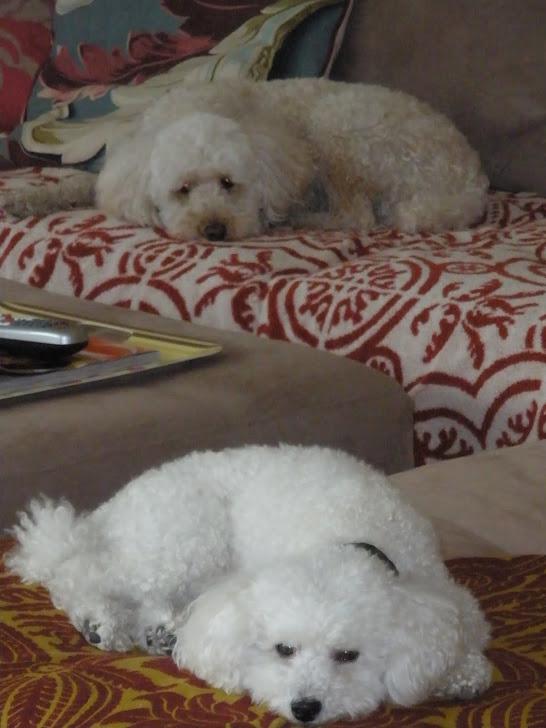 Domino (top) & Dash
