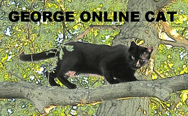 George Online Cat