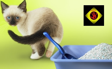 Travelling can servicios caninos y felinos - Quitar olor a pis de gato ...