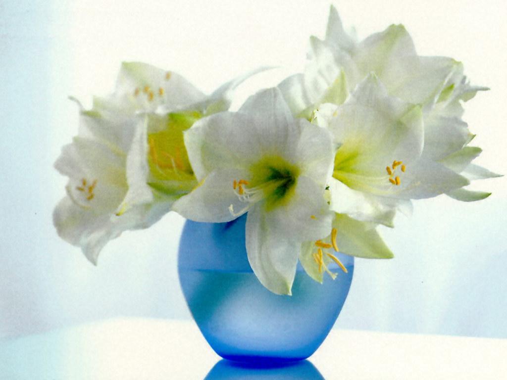 http://3.bp.blogspot.com/-K13iM4dJLAs/TaJVqrAs0rI/AAAAAAAAAhs/JmvV-pPUjWY/s1600/flower-wallpapers-0016.jpg
