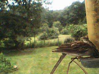 back feeder