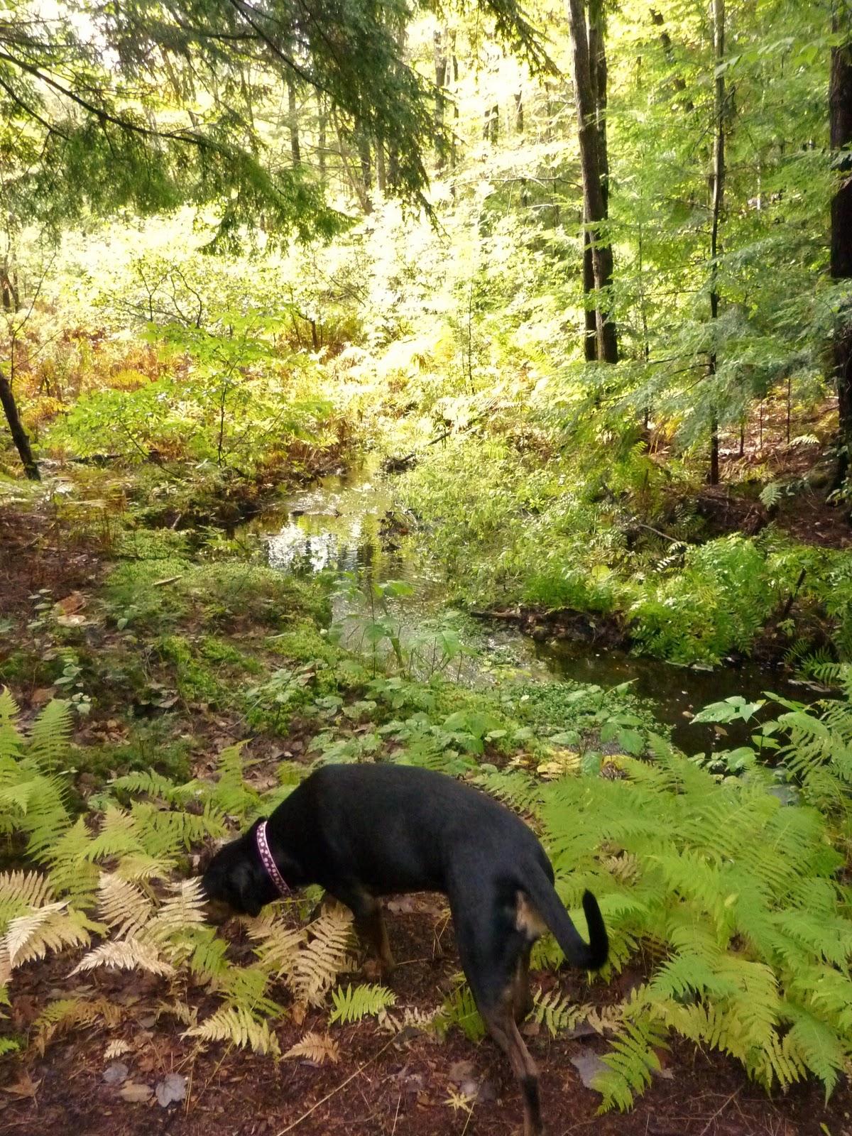 how to get through the phantom forest maplestory