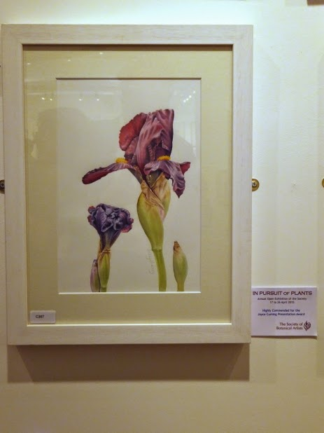 Bearded Irises - highly commended Joyce Cumming Award Society of botanical artists