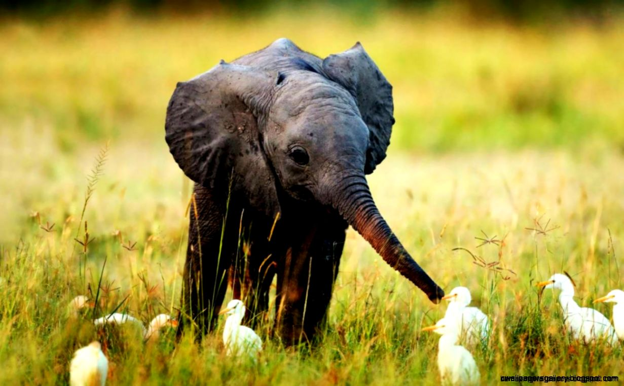 cute wild animals pictures wallpapers gallery
