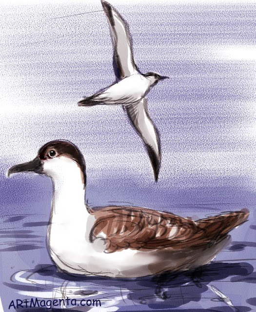 Great Shearwater is a bird drawing by artist and illustrator Artmagenta