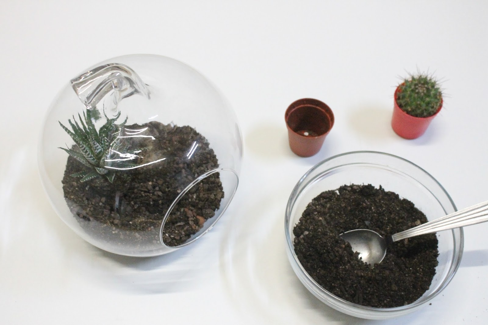 id e d co cr er un terrarium avec des cactus. Black Bedroom Furniture Sets. Home Design Ideas