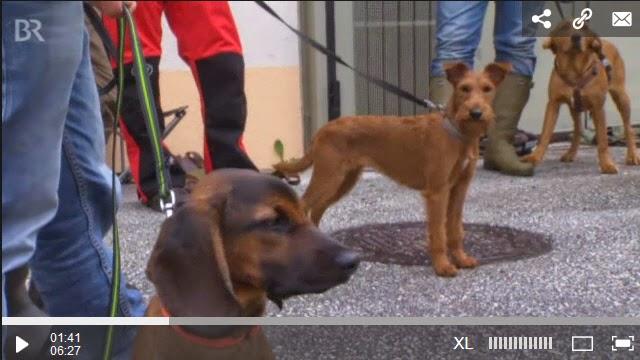 http://www.br.de/mediathek/video/sendungen/unser-land/kaefer-spuerhunde-asiatischer-laubholzbockkaefer-100.html