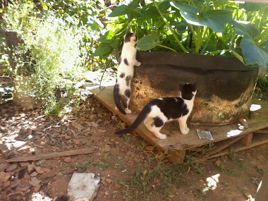 cats playing in the garden