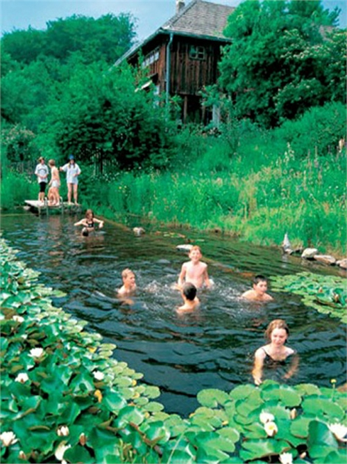 Natural swimming pools on pinterest natural pools for Pond swimming pool