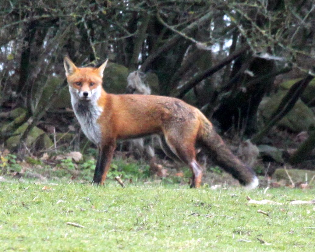 Wild with Pants: Quick brown fox
