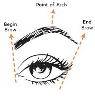 Geva cosmetics beauty blog perfect eyebrowseverytime eyebrow tip when shaping eyebrows you should determine where the eyebrow should begin and end using the diagram decide the points ccuart Choice Image