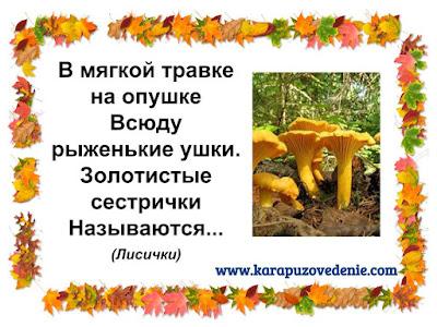 загадки про грибы лисички для детей с ответами в картинках
