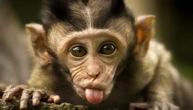 Όποιος ΔΕΝ έχει διαβάσει αυτό το πείραμα με τις μαϊμούδες! ΠΡΕΠΕΙ να το διαβάσει... !!!