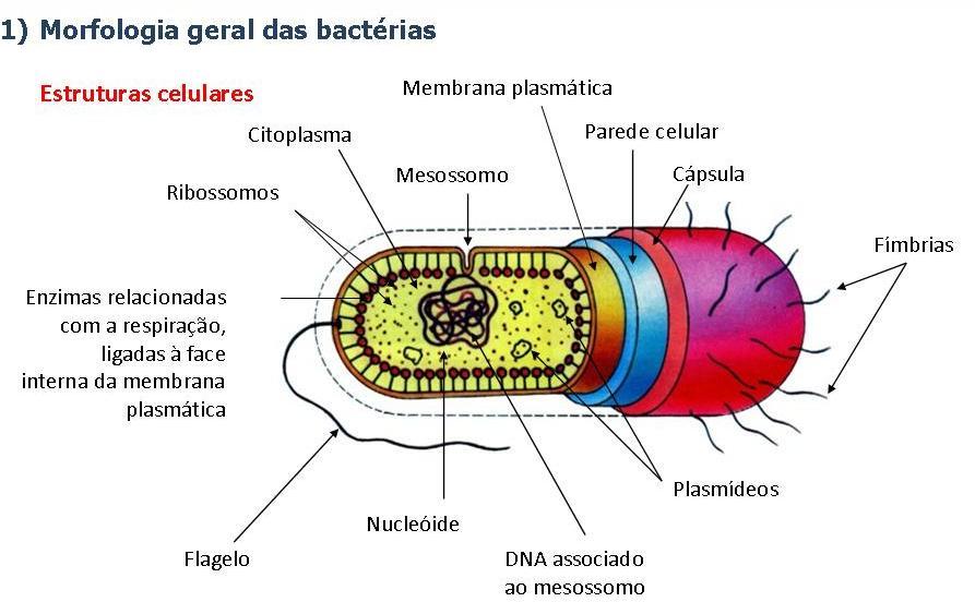 Sintomas de existência um verme em um organismo