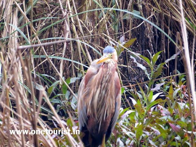 Keoladeo national park , Bharatpur , Rajashthan
