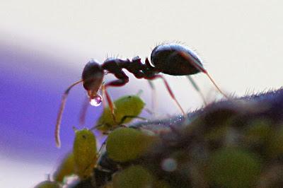 Tahukah Kamu 3 Kepandaian Semut ini?