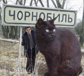 The world largest cat, largest cat in world, house cats, largest cat ...