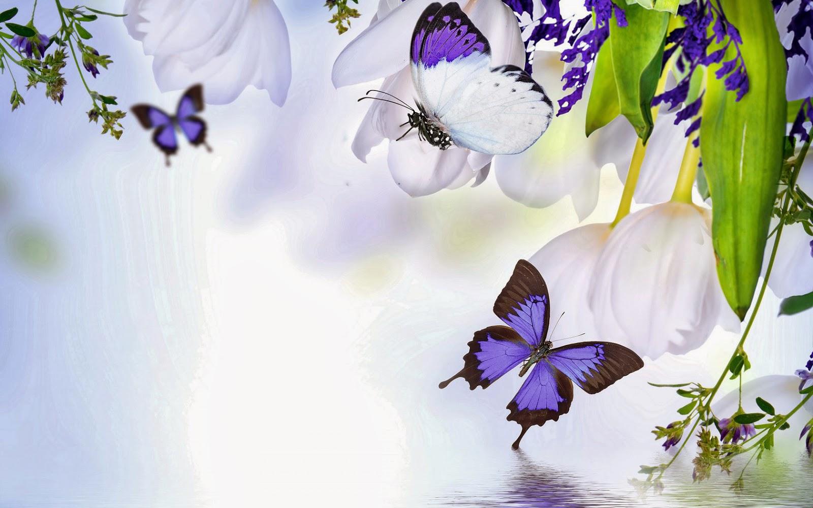 Witte bloemen en paarse vlinders