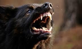 Film horror con cani assassini maximum film