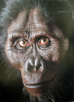 australopithecine anamensis Australopithecus anamensis is the oldest species currently known in the genus australopithecus true click on the muscle that is vertically oriented in hominins to allow for a crushing ability.