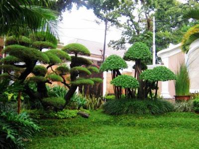 Tips membuat Taman Minimalis modern