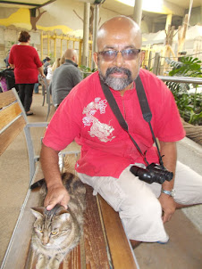 With a beautiful stray zoo cat in the elephant viewing enclosure.