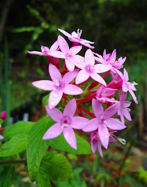Flora da Chapada Norte