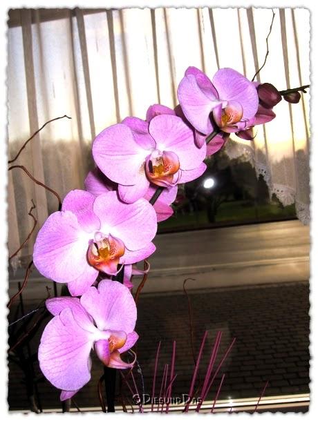 dies und das wundersch n bl hen meine orchideen. Black Bedroom Furniture Sets. Home Design Ideas