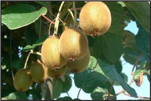orto per tutti piante da frutto