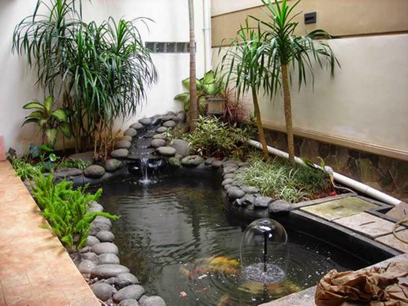 desain kolam ikan minimalis bernuansa eksotis dan energik