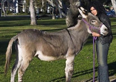 فتاة امريكية شابة تتزوج من حمار  - american girl marry married donkey