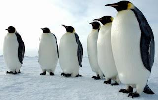 Pingüinos en fila
