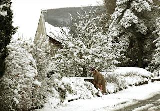 40 Mil hogares sin luz en Inglaterra por fuertes nevadas. 4486674w