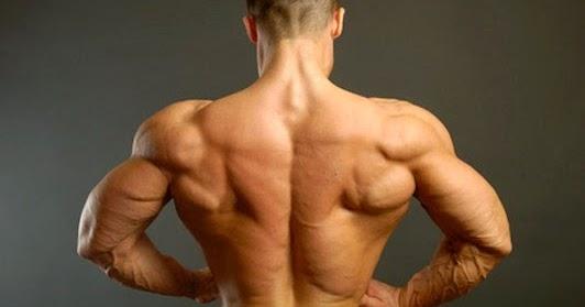Musculation du dos, exercices pour muscler le dos ~ Sports