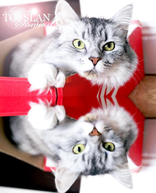 aliciasivert, alicia sivertsson, alicia sivert, katten tofslan, katt, kattmodell, modell, cat model, katten tofslan studios