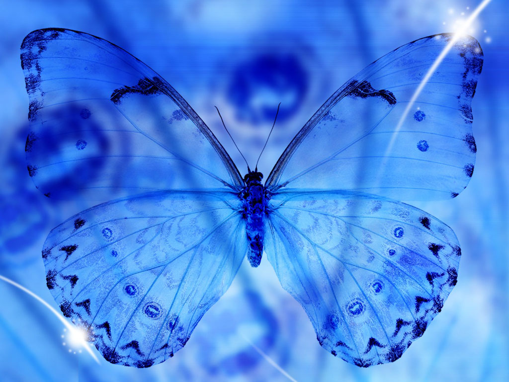 new blue butterfly pictures - photo #3