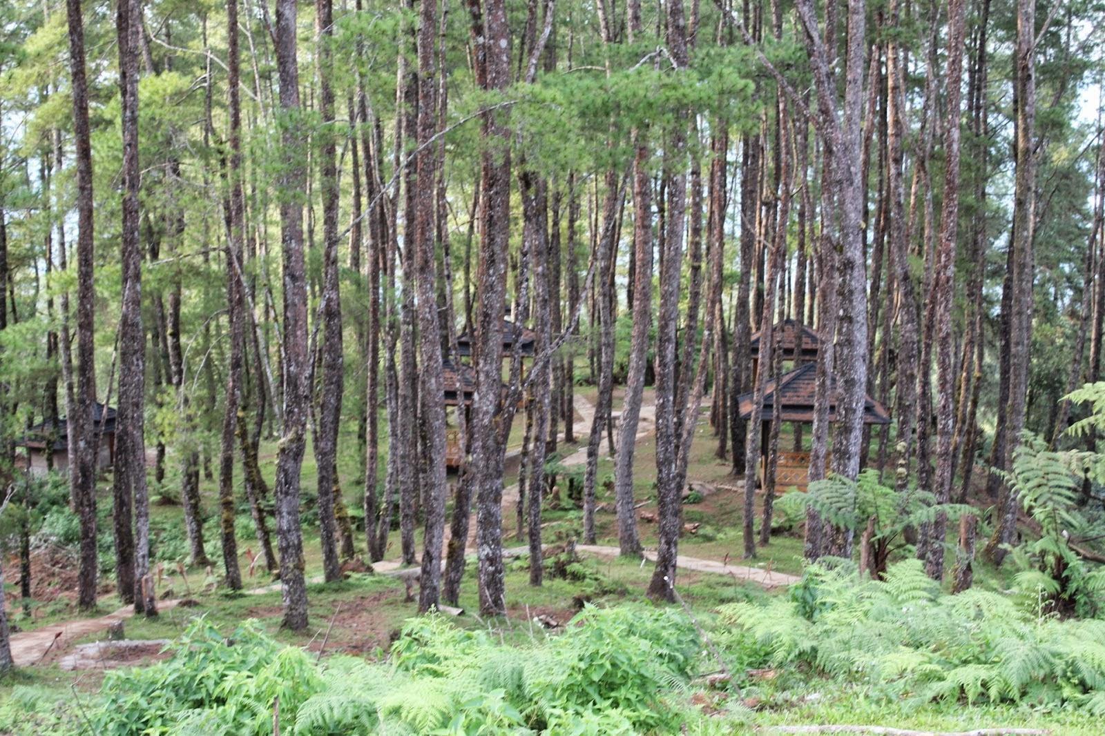 Hutan Pinus Wisata Alam Pango-Pango Tana Toraja