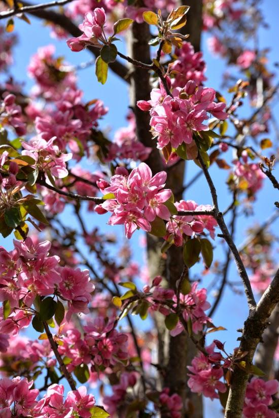 dissolved   spring  ault park