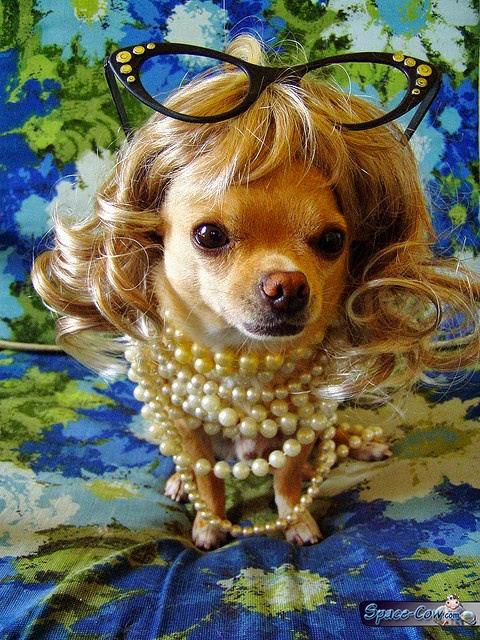 funny cute dog pics