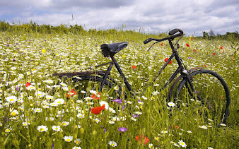 #22 Bikes Wallpaper