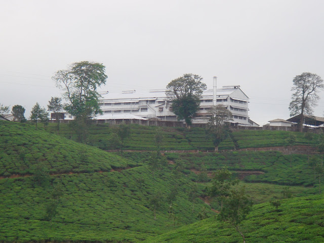Tea Estate at valparai