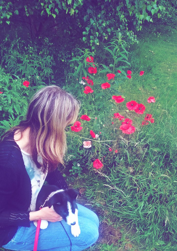 Puppies And Poppies..