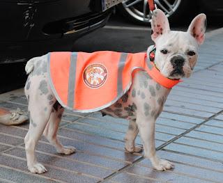 Schutzweste - Warnweste für Hunde Gran Canaria Pets- Tierschutzverein Gran Canaria