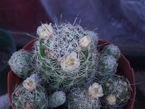 Cactus y Flores