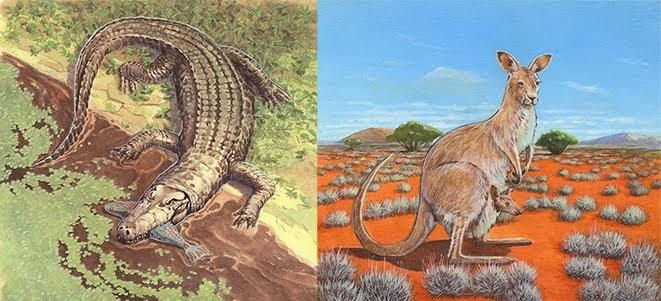 Crocodile et Kangourou